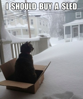 lolcat-suit-boat-winter-snow-i-should-buy-a-sled.jpg